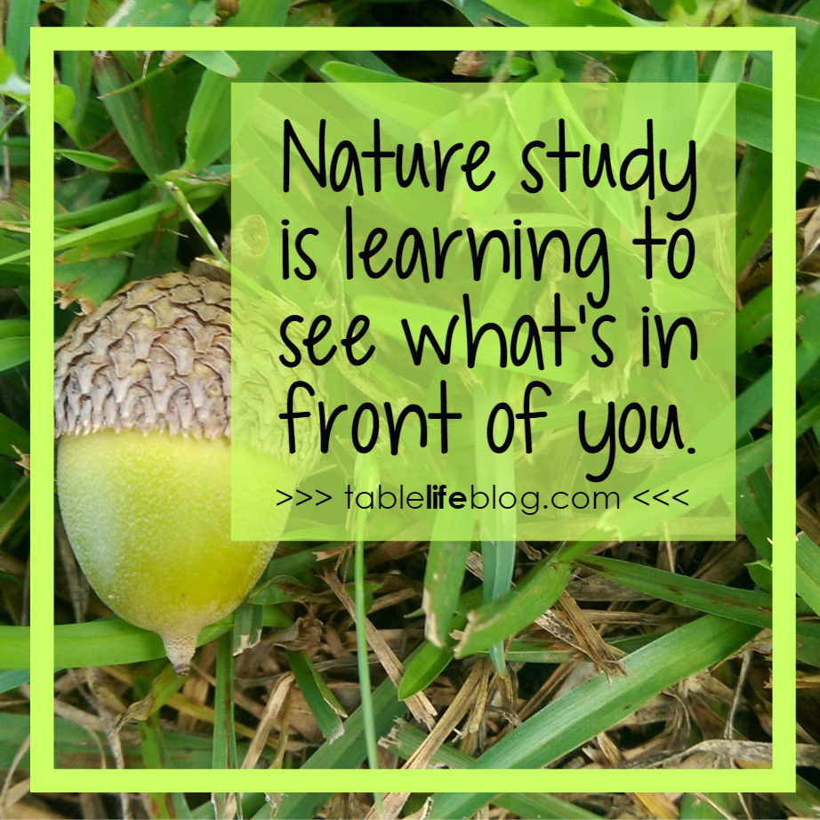 10 Easy Nature Study Ideas Anyone Can Enjoy