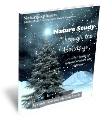 5 No-Prep, Last-Minute Homeschool Christmas Ideas Nature Study Through the Holidays