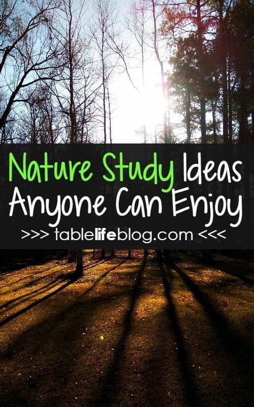 10 Easy Nature Study Ideas Anyone Can Enjoy