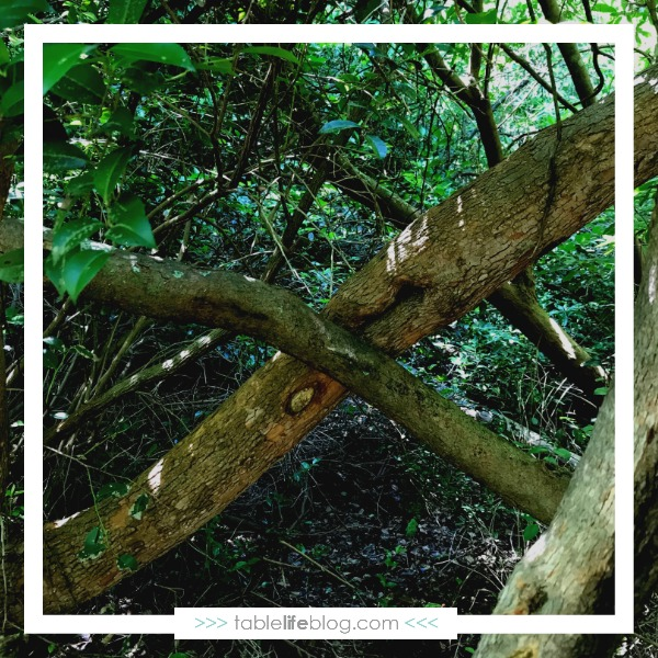 Imagination On The Loose: Alphabet Scavenger Hunt & Nature