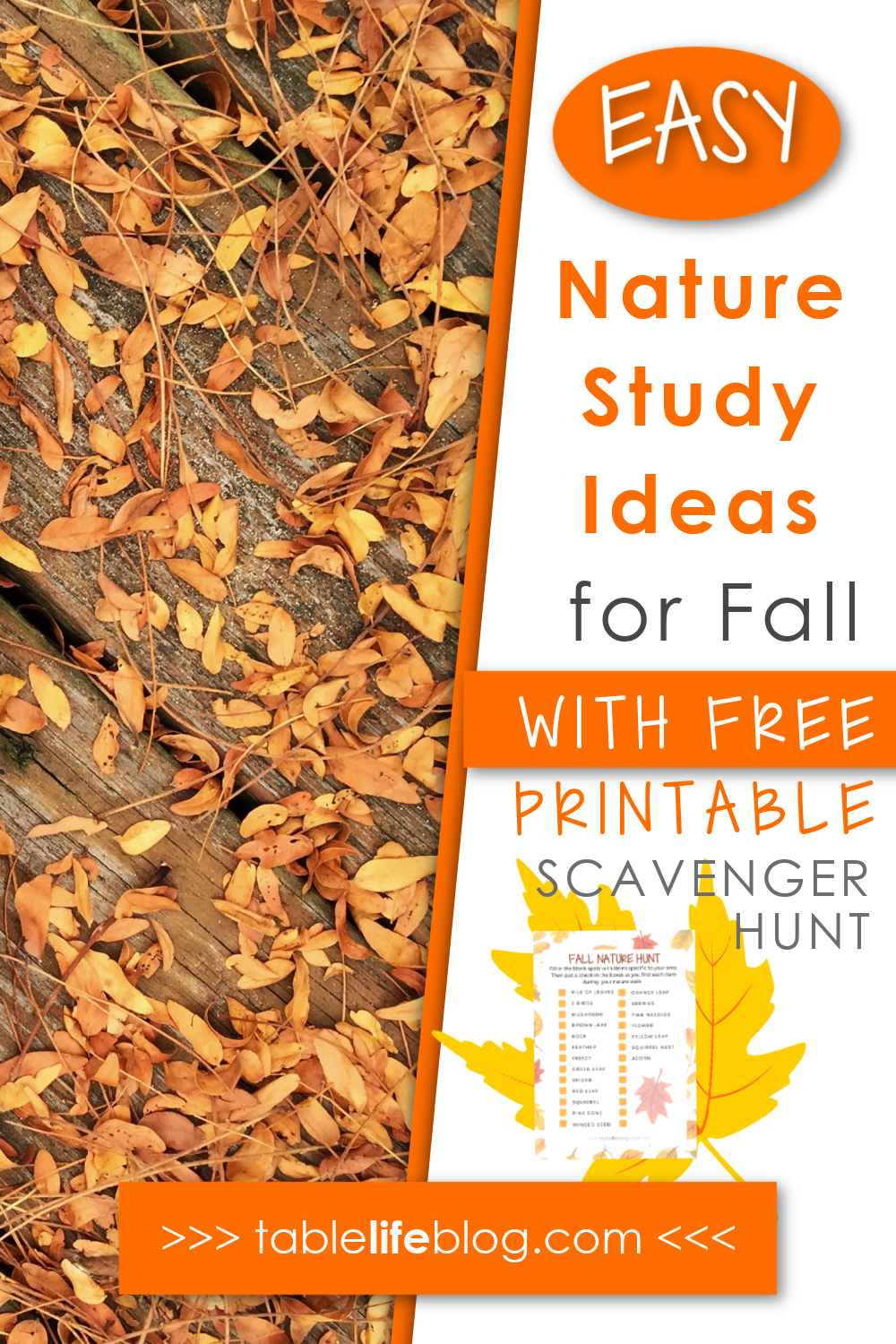Goodbye summer and hello fall! Here are our favorite fall nature study ideas plus a FREE nature scavenger hunt printable!
