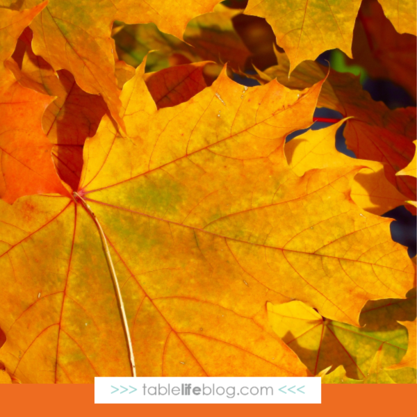 Our Favorite Fun and Easy Fall Nature Study Ideas