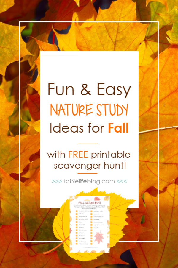 8 Fun and Easy Fall Nature Study Ideas
