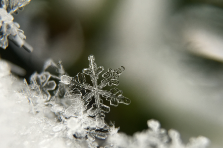 8 Easy Winter Nature Study Resources for Your Homeschool