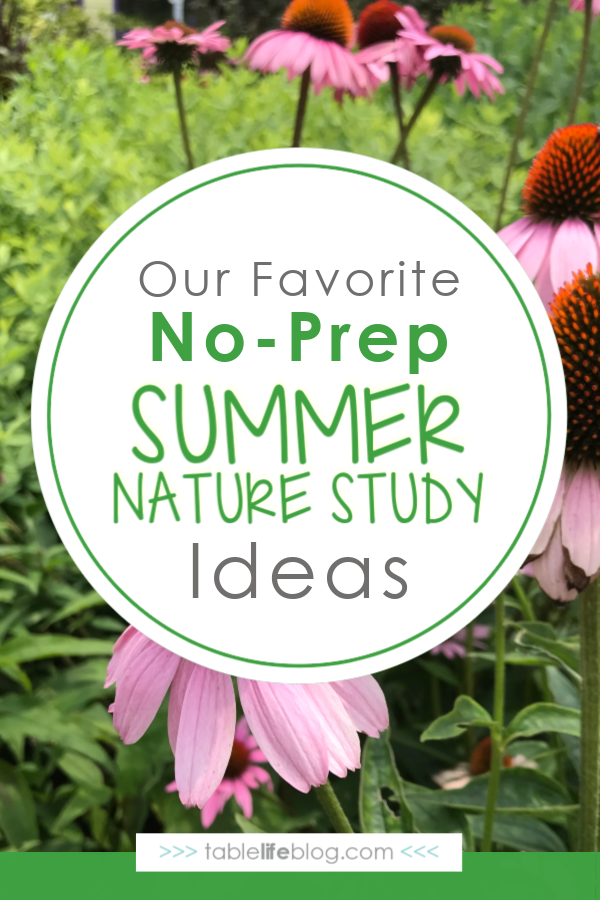 Need to add some new summer nature study ideas to your homeschool plans? We've got you covered with a fun list of suggestions to help you learn while enjoying summer with your kiddos.