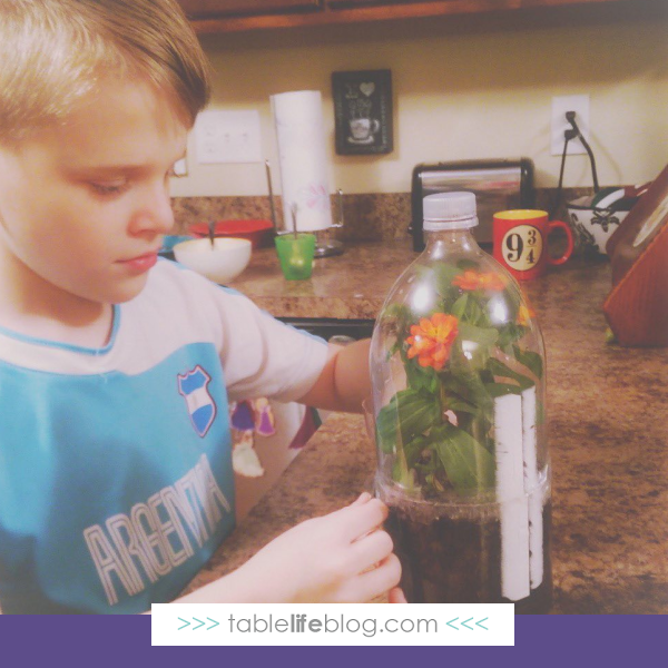 Curious about using Sassafras Science Adventures in your homeschool? Here's what you need to know about this story-based elementary science curriculum.